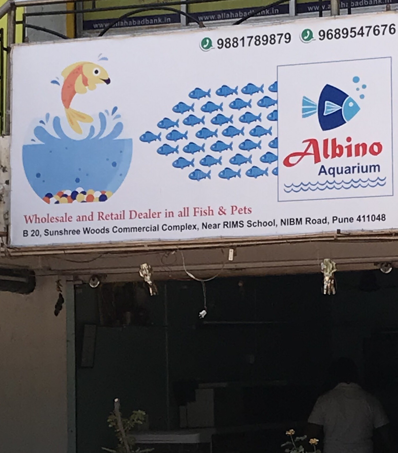 Albino Aquarium Pet Store in Kondhwa Pune