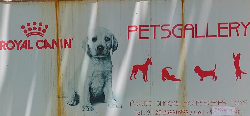 Pets Gallery Pet Store in Aundh Pune